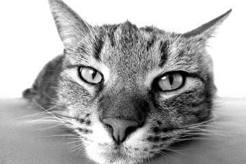 Podawanie lekarstwa kotu w naszym domu